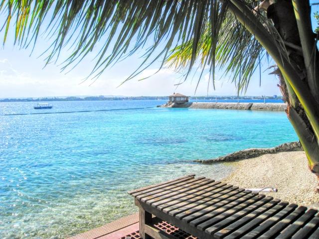 フィリピンの海とヤシの木