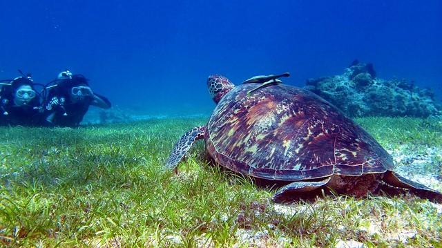 ボホール島の亀とダイビング