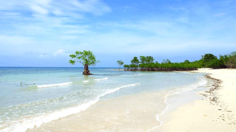 シキホールの海とマングローブの木